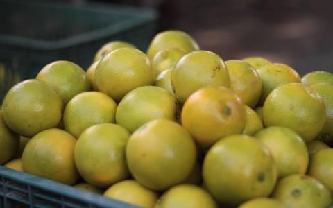 【預購!酸甜原味 魏老師的老欉柳丁 10斤裝】山坡種植山柳橙 薄皮多汁 果粒飽滿